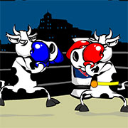 Корови боксують