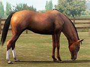 Створи свою кінь