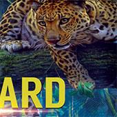 Подивися на життя леопарда