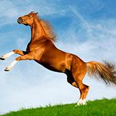 Симулятор коней