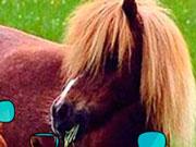 Великі поні